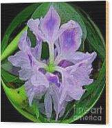 Water Lily Circle Wood Print