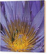 water lily from Madagascar Wood Print