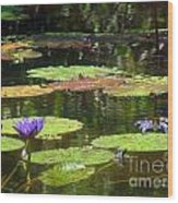 Water Lily Garden 2 Wood Print