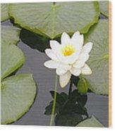 Water Lily I I Wood Print