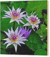 Water Lily IIi Wood Print