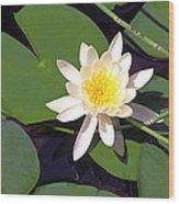 Water Lily I I I Wood Print