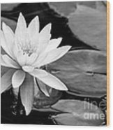 Water Lily In The Lily Pond Wood Print