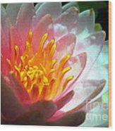 Water Lily In The Sun Wood Print