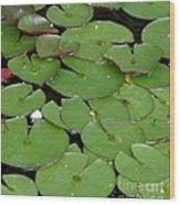Water Lily Leaves Wood Print