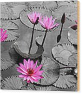 Water Lily Lotus Flower And Leaves Wood Print