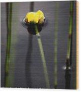 Water Lily  Luke  Wood Print