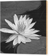 Water Lily On Pad Wood Print
