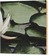 Water Lily Pad Wood Print
