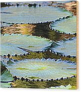 Water Lily Pads In The Morning Light Wood Print