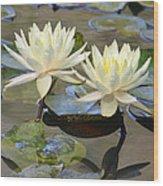 Water Lily Pair Wood Print
