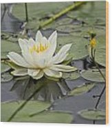 Water Lily Pictures 45 Wood Print