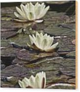 Water Lily Pictures 64 Wood Print