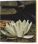Water Lily Pictures 67 Wood Print