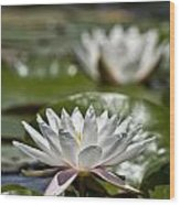 Water Lily Pictures 70 Wood Print