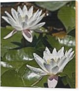 Water Lily Pictures 75 Wood Print