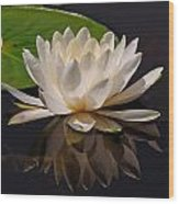 Water Lily Pictures 81 Wood Print