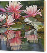 Water Lily Profusion Wood Print