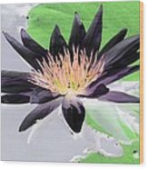 Water Lily - Purple Power - Photopower 1377 Wood Print