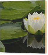 Water Lily Reflection II Wood Print
