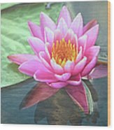 Water Lily Wood Print by Sandi OReilly