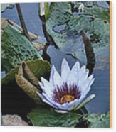Water Lily Wood Print by Sharon McLain