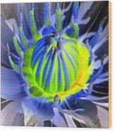 Water Lily - The Awakening - Photopower 03 Wood Print