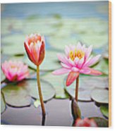 Water Lily's II Wood Print by Tammy Smith