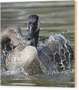 Water Logged - Canadian Goose Wood Print