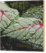 Water On The Leaves Wood Print
