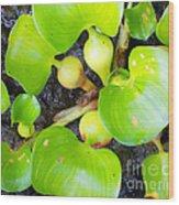 Water Plants 1 Wood Print