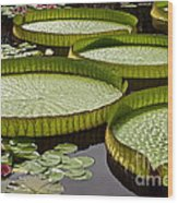 Water Platter Charm Wood Print