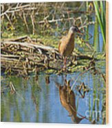 Water Rail Reflection Wood Print