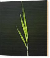 Water Reed Abstract Wood Print