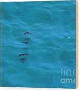 Water Skimmers Wood Print