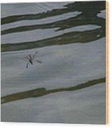 Water Skipper In Digital Oil Pastel Wood Print