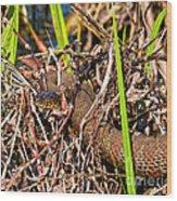 Water Snake In Hiding Wood Print