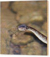 Water Snake Wood Print