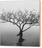 Water Tree Wood Print