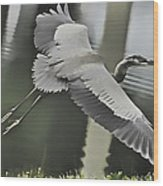 Waterbird Flying Wood Print