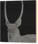 Waterbuck B W Abstract Wood Print