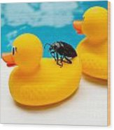 Waterbug Takes Yellow Taxi Wood Print by Amy Cicconi