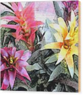 Watercolor And Ink Sketch Of Colorful Bromeliads Wood Print