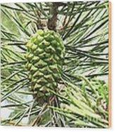 Watercolor Of Ripening Pine Cone Wood Print