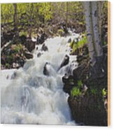 Waterfall By The Aspens Wood Print