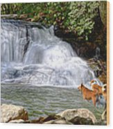 Waterfall Dogs Wood Print by Bob Jackson