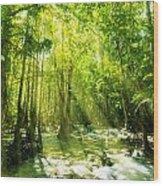 Waterfall In Rainforest Wood Print