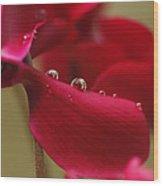 Waterflower Drops Wood Print