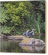Waterfowl Pond Wood Print