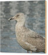 Waterfront Seagull  Wood Print